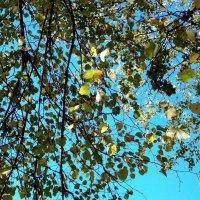Начало осени. :: Фотогруппа Весна.