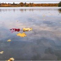 Золотая мелодия осени . :: ALISA LISA