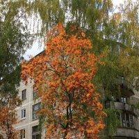Осень в городе :: Сергей Борденов