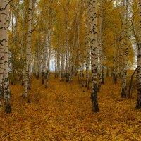Дождливая осень :: Роман Царев
