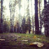Осень.... :: Мария Попова