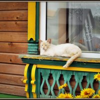 Кошка на отдыхе у своего окна :: Михаил Малец