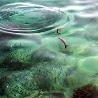 Морские обитатели. :: Маргарита ( Марта ) Дрожжина