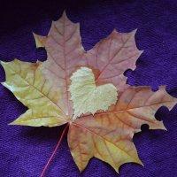 Осень,осень,сколько слез приносит, разноцветно-грустная пора. :: Таня Фиалка