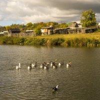 Осень в деревне :: Алексей Окунеев