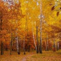 Золотая осень. :: Владимир Брусенцев