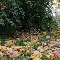 Осень :: Oleg4618 Шутченко