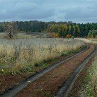 Цветной октябрь :: Женя Лузгин