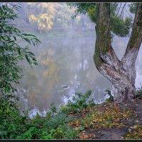 В старом парке. :: Vadim WadimS67