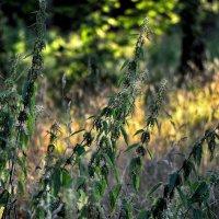 Сам собой заколосился урожай... :: Ирина Данилова