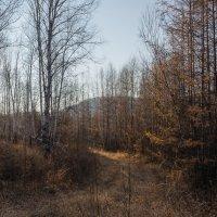 Осенний лес :: Сергей Сол
