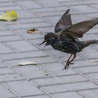 Птичка :: Николина Вишнякова