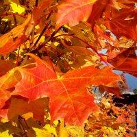 Рыжая осень :: Наталья Тимофеева