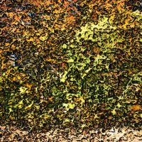 Осень, осень! :: Experimenter