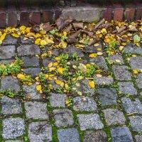Осенний лист :: Евгений Мельников