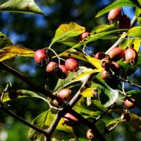 Осенние плоды :: Владимир Бровко