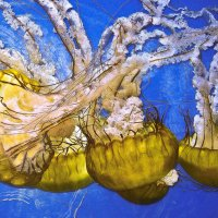 Семейство медуз. :: Барбара