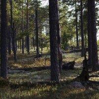 В лесу.... :: Галина !!!!