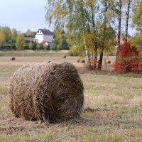 Осеннее поле :: Андрей Куприянов
