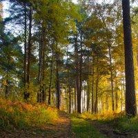 Утро в лесу :: Вадим Кудинов