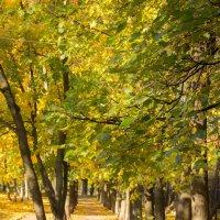 В осеннем парке :: Elena Ignatova