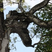 Заколдованный лес.... :: Надежда Млат