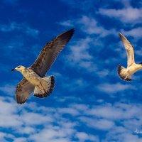 Чайки :: Алиса Терновая