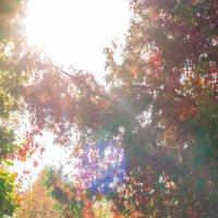 Осень сумасшедшая :: Юрий Шувалов