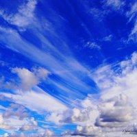 Ветер, ветер. ветер бродяга.. :: Антонина Гугаева