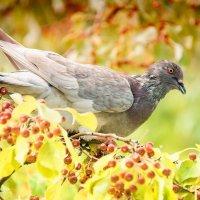 Птица счастья :: Ольга Гусева