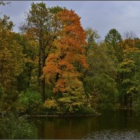 Осень :: Irina Gorbovskaya