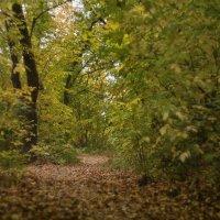Усыпана дорожка осеннею листвой :: sorovey Sol