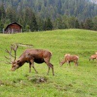Альпийское семейство :: Мария Кондрашова
