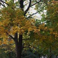 Шелестел листвою ветер :: Александр Буянов