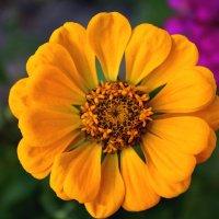 flower :: Oksana Nesterova