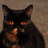 подъездная кошка Машка :: Оксана Полякова