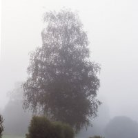 Деревья в тумане :: Valerii Ivanov