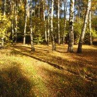 Осень, которая радует IMG_2191 :: Андрей Лукьянов