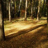 Осень, которая радует DSC09115 :: Андрей Лукьянов