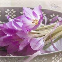 С пожеланием доброго утра... :: Bosanat