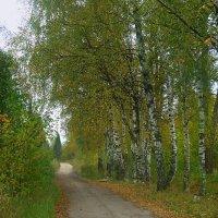 Осень в березовой роще :: Павлова Татьяна Павлова
