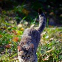 кошка :: Наталья Слисаренко