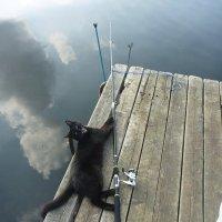Тихо, рыбу распугаете! :: Сергей