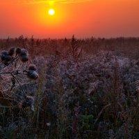 Первые заморозки сентября... :: Roman Lunin