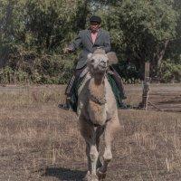 Camel-куря, живёшь не зря... :: Андрей Добриков