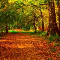 Осень :: Андрей Афонасьев