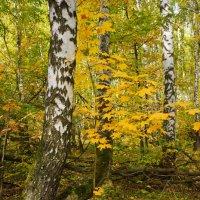 Осенний мотив. :: павел Труханов