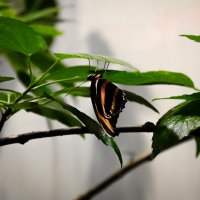 мир бабочек :: Даниил pri (DAROF@P) pri