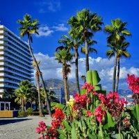 Там, где всегда лето. Побережъе Коста дель Соль. Испания. :: Виталий Половинко