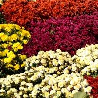 Осенние цветы :: Владимир Болдырев